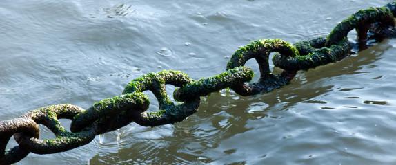 Algae Chain