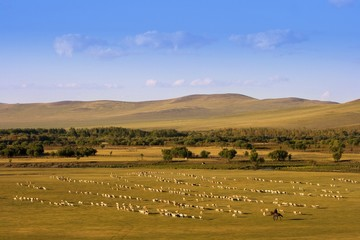 A group of sheep passing through a grassland.