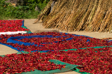 Drying red hot pepper