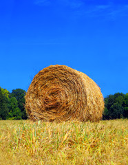 Roll of hay in field and a clear blue sky