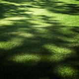 backyard garden under the shade poster
