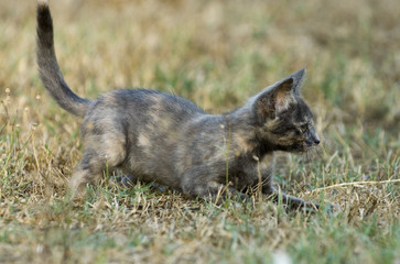 Young wild cat