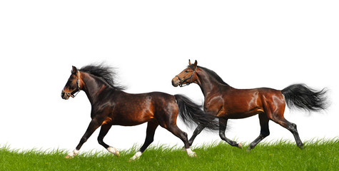 horses trot