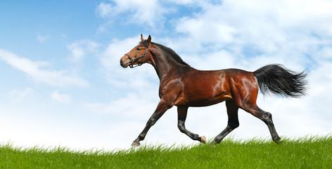 horse trots