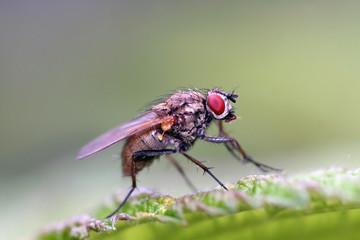 Fliege ganz nah