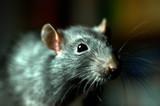 Ratte - 5481407