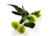 Fototapety FOUR OLIVES ON BRANCH WITH LEAVES