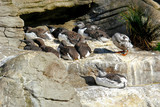 a gaggle of sea birds perched on a rock ledge