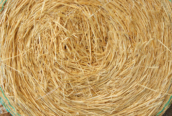 a big round bale of yellow straw for stock feed