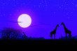 Leinwanddruck Bild Africa di notte