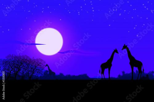 Leinwandbild Motiv Africa di notte