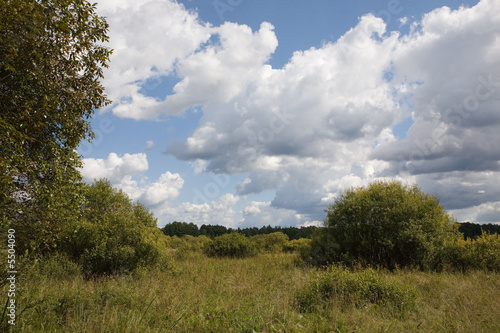 Abandoned natural meadows under summertime cloudy sky