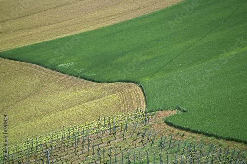 A young vineyard in Central Italy