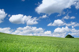 summer field with cumulus clouds, focus set in foreground poster