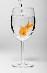 verre eau poisson rouge