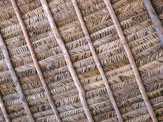 Ceiling of leaf of palm of the Coconut