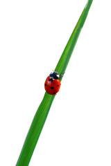 Ladybird on a tree leaf