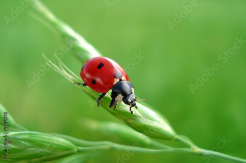 Cute LadyBug - Happyness sign