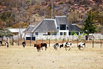 African farm, Botswana, cattle, wide land,