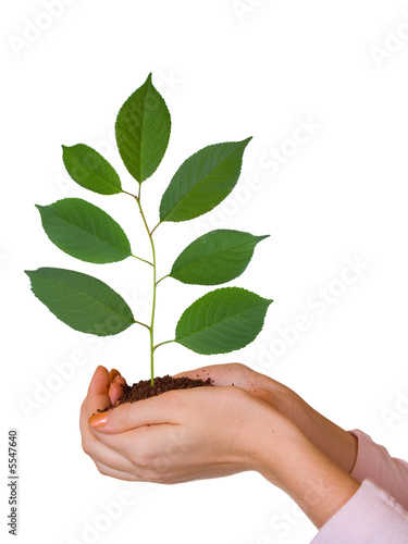 Green plant in women hands, isolated on white background