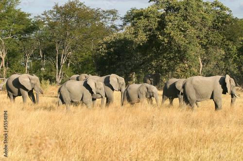 Leinwanddruck Bild Elefantenherde im Moremi Nature Reserve