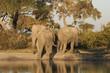 Leinwanddruck Bild Elefantenherde an Wasserstelle in Savuit