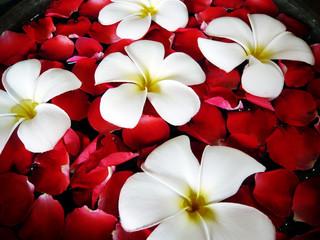 Tropical spa close-up - fragapani and rose petals.