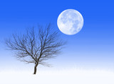 Bare tree in a frosted grass field, with full moon above poster