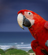 Green wing macaw or parrot bird on tropical blue sea background