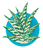 Graphic Illustration of an alovera plant