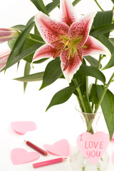 Pink lily and paper hearts on white background