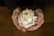 old open hands with white rose on woode table