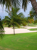 Caribbean golf course with sand and palm trees poster