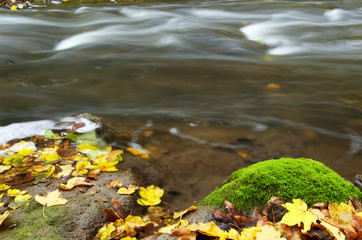 An image of maple leaf amongst a river