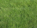 Background of trimmed fresh green grass poster