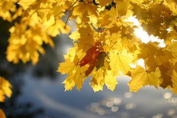 Herbst_3