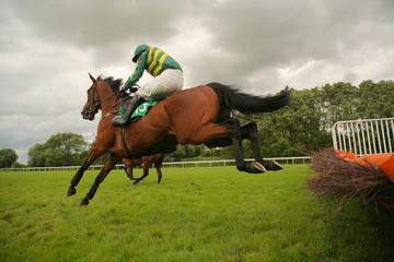 race horse jumping hurdle