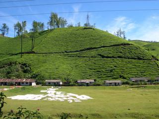 Munnar, tea plantation in the kerala state of india
