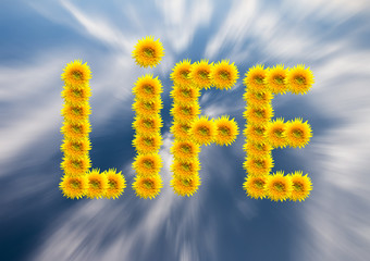 Sunflowers depicting the word life.