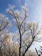 Forêt gelée sur ciel bleu