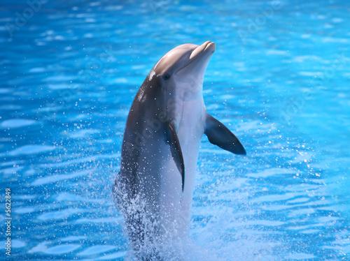Foto op Aluminium Dolfijn A Dolphin