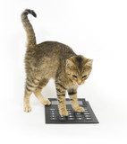 kitty calculator poster