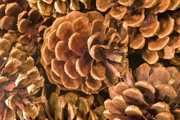 Pinecone Background