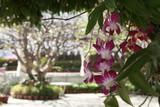 Fototapety Orchidee in Tempel