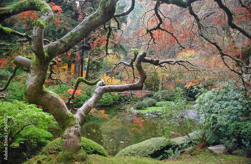 drzewo-zen