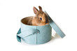 Little brown easter bunny in a soft blue box
