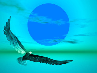Aquila nel tramonto