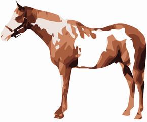 cavalo pinto