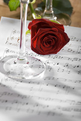 red rose on a sheet of notes close up shoot