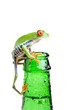 frog on a bottle with water, a red-eyed tree frog isolated